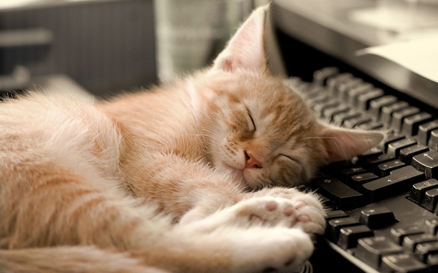 cat-sleeping-in-funny-way-on-keyboard